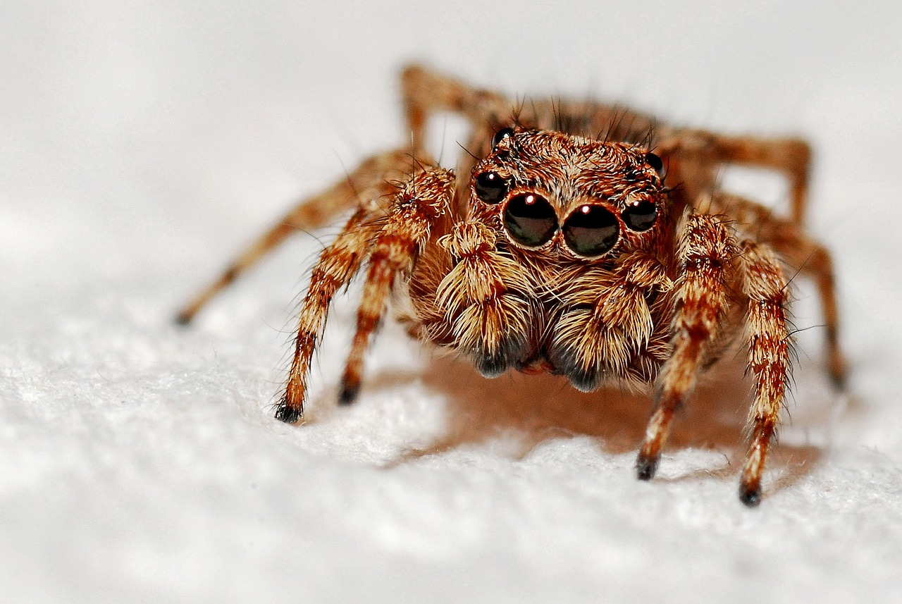 Arachnids, Spiders For Kids, interesting facts about spiders