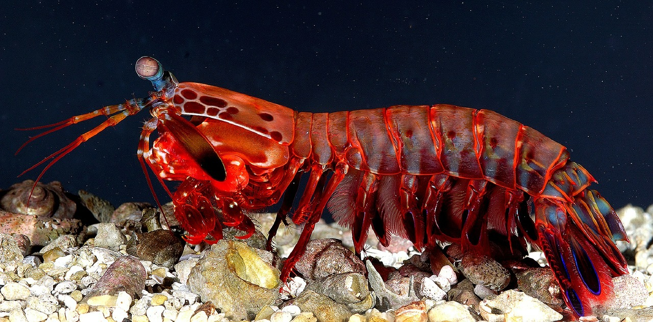 What is a Crustaceans,Under sea animal