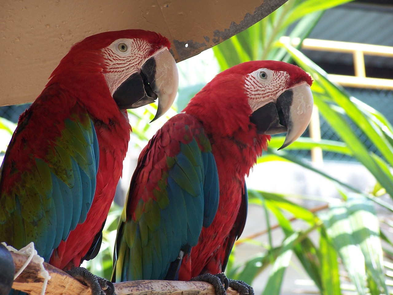 Tropical and Exotic Birds